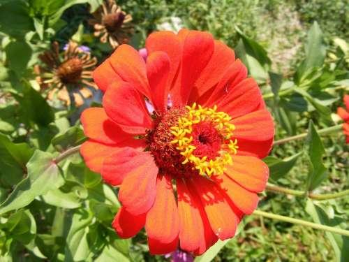 Flowers Fucsia Garden Red Sun Through Plants