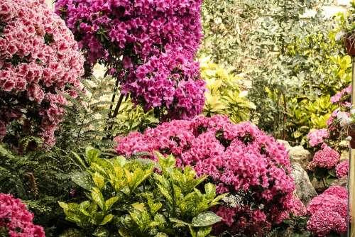 Flowers Plant Flora Garden