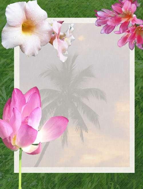 Flowers Tropical Tropics Beach Palm Trees Scenic