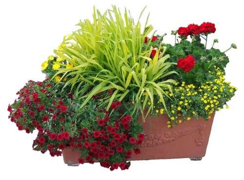 Flowers Trough Flowers Planting
