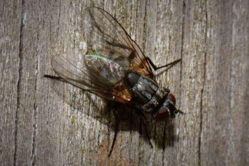 Fly Bug Animal Macro