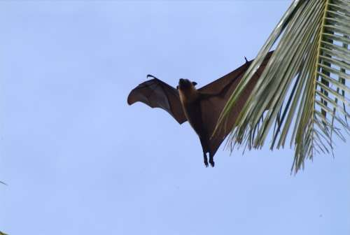 Flying Fox Maldives