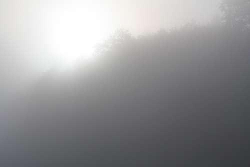 Fog Morning Sun Veil Foggy