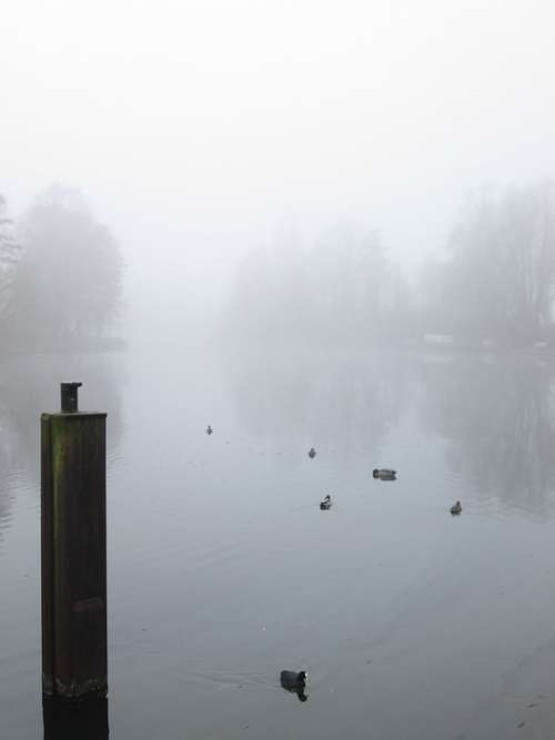 Fog Weather Ground Fog Lake