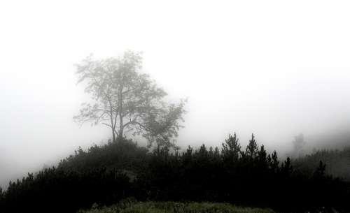 Fog Mystical Forest Mood Unterberg Mysterious
