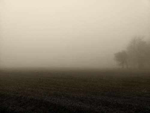Fog Morning Atmosphere Mood Sky Field Rural
