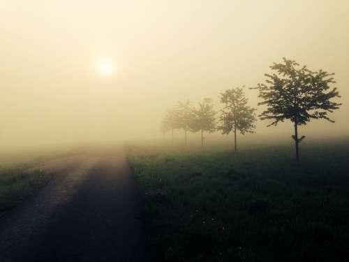 Fog Sun Landscape Atmosphere Mood