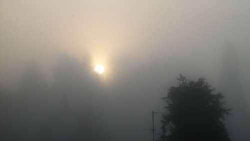 Fog Sun Winter