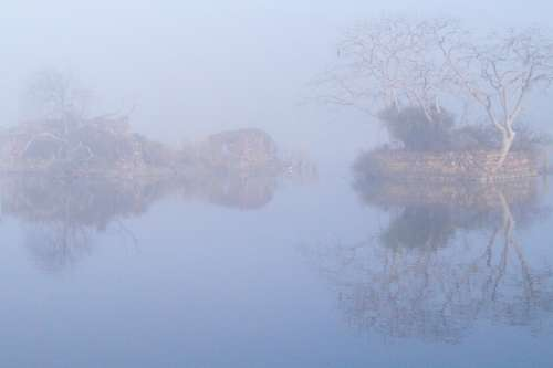 Fog Mist Lake Water Swamp Landscape Woods