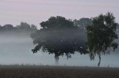 Fog Fog Items Morgenstimmung Veil Morning Dew