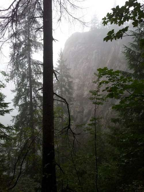 Fog Forest Mountains Trees Nature Misty Dark