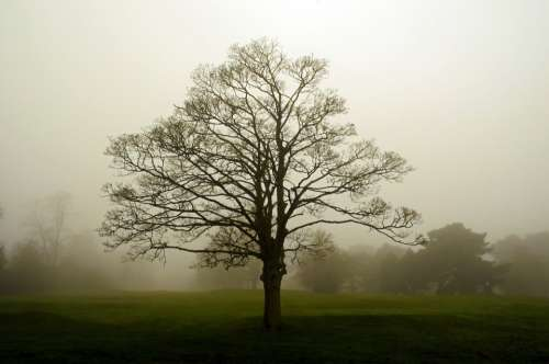 Fog Landscape Tree Trees Seasons England Branch
