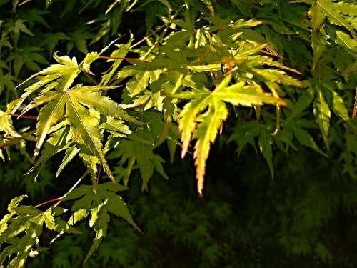 Foliage Green Branch Plant Plants Sheet