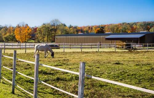 Foliage Vermont Fence Barn Horse Landscape Rural