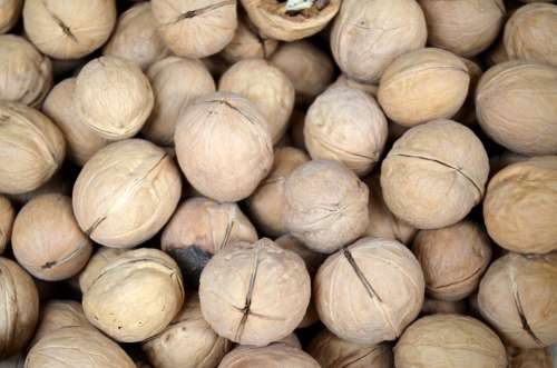 Food Season Walnut Walnuts Nut Nutmeat Seed