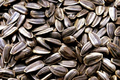 Food Snack Seeds Sunflower Sunflower Seeds Macro