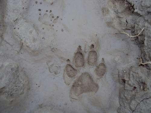Footprint Dog Mud Surface
