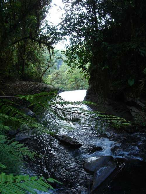 Forest River Water