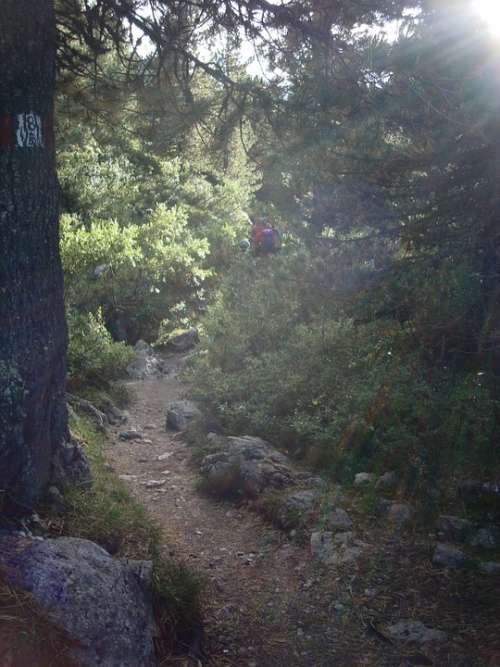 Forest Away Lichtspiel Hiking Path Trail