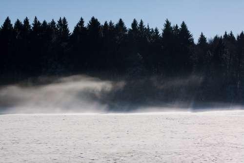 Forest Fir Forest Fog Resolution Scan Snow Shadow