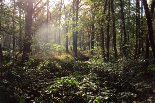 Forest Nature Trees Autumn Sunlight