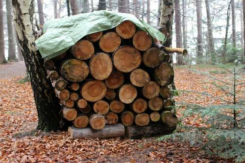 Forest Nature Wood Firewood Holzstapel Stack Like