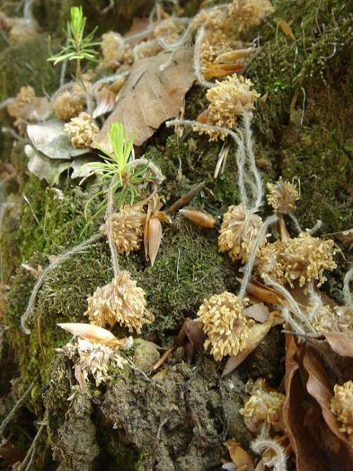Forest Nature Plant