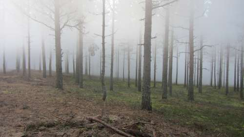 Forest Wood Twigs Nature Summer Finnish Fog