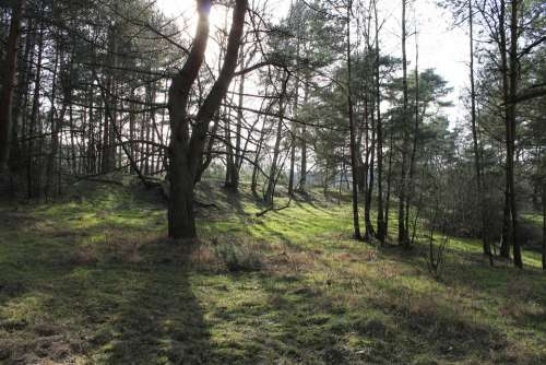 Forest Glade Trees Atmosphere Nature Landscape