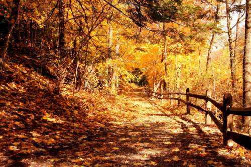 Forest Trail Forest Trail Autumn Fall Fall Leaves