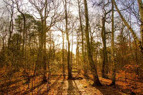 Forest Growth Hiking Without Leaf Lumber Industry