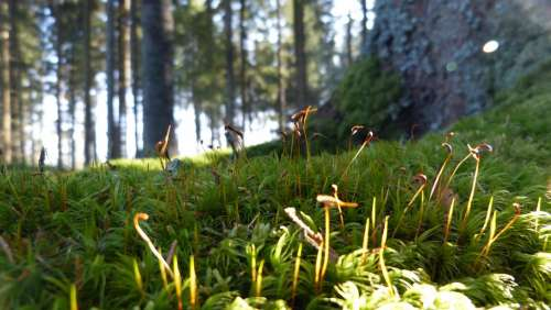 Forest Forest Floor Moss Nature Landscape