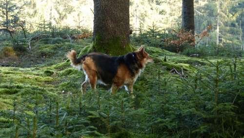 Forest Dog Nature Landscape