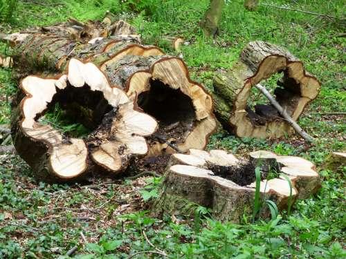Forest Trunk Wood Tree Konary