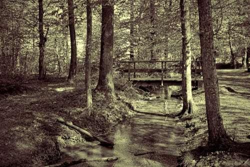 Forest Tree Bach Watercourse Wave Bridge Pool