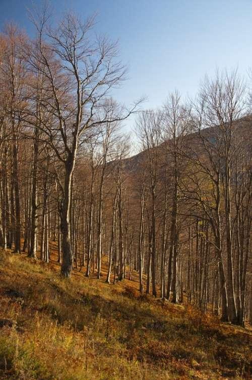 Forest Mountain Nature Landscape Travel Summer