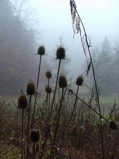 Forest Nature Fog Autumn Thistle Aggtelek Hills