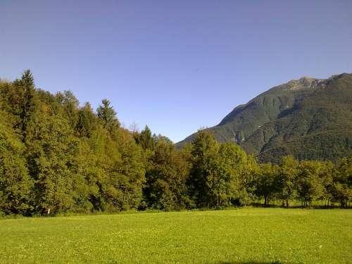 Forest Mountain Friuli Venezia Giulia Fir Nature