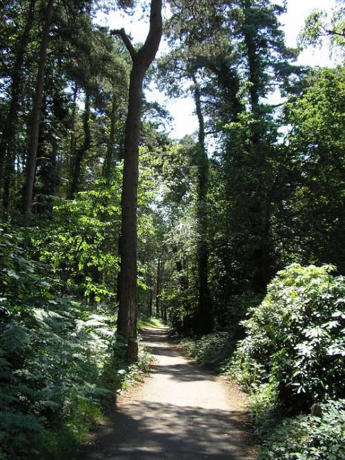 Forest Trail Nature Landscape Path Woods Outdoors