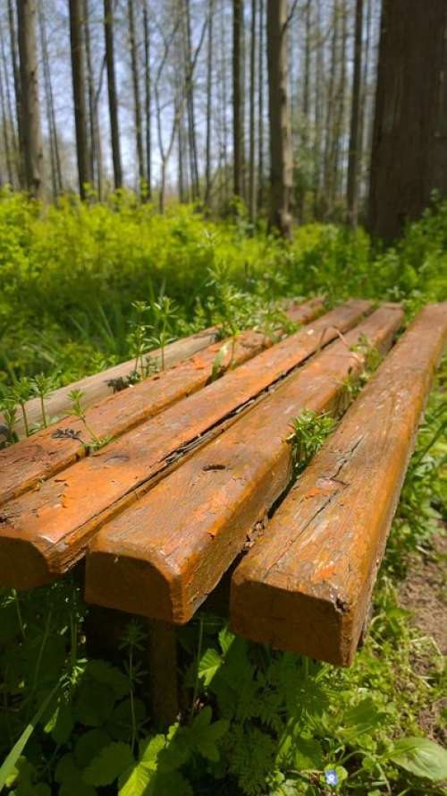 Forest Wooden Stool Grassland