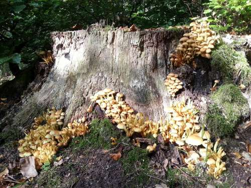 Forest Stump Nature Fungi Old