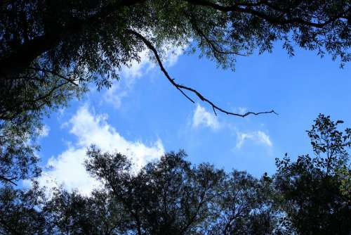 Forest Trees Sky Clouds Blue White Green Branch