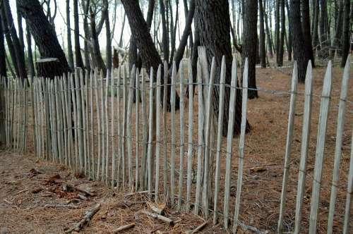 Forest Landscape Nature Pineda Screen Saver