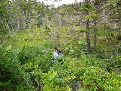 Forest Isle Au Haut Maine Island Hiking Camping