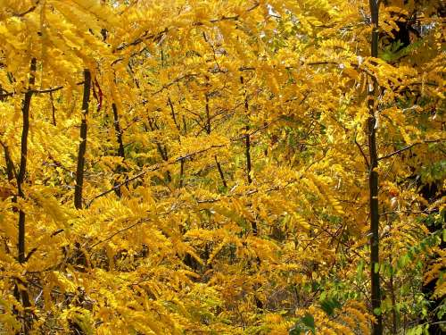 Forest Autumn Trees Yellow Leaf Landscape