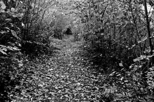 Forest Away Glade Forest Path Hiking Mood Autumn