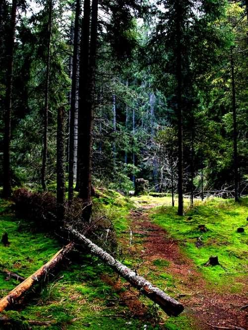 Forest Nature Landscape Trees Forests Light