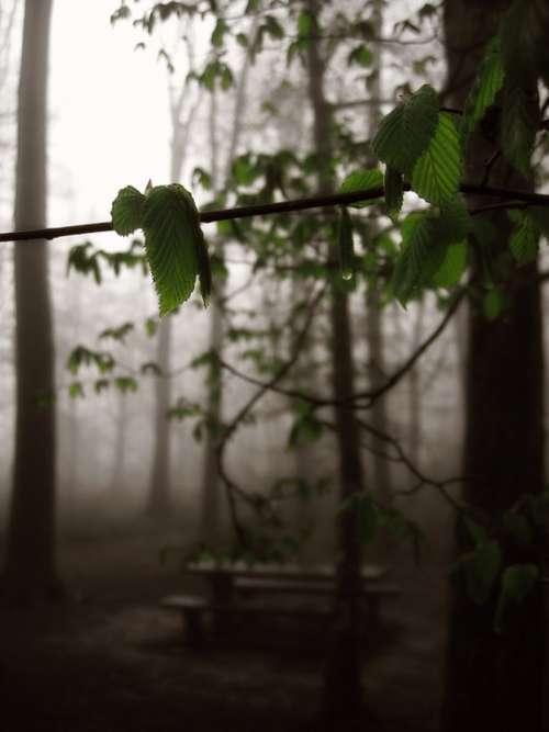 Forest Fog Tree Glade Bach Bridge Atmosphere
