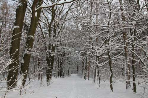 Forest Winter Snow Trees Aesthetic Forest Path