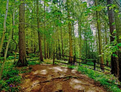 Forest Tree Trees Branch Twig Trip Seasons